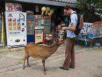 Nara with deer